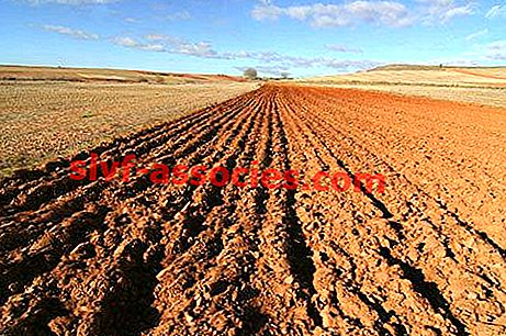 Agricultura Secano