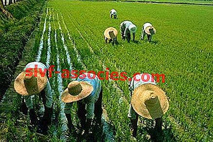 Underhållsbruk Jordbruk