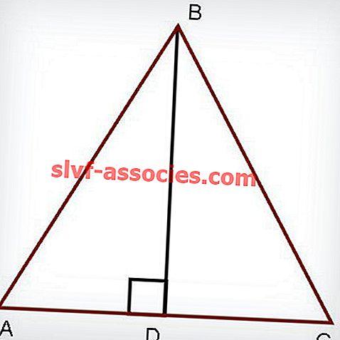 Propriétés du triangle